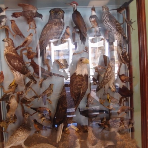 Bird Display in Fannin Tower