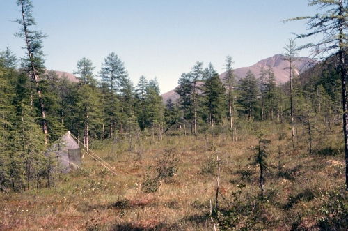 Fig.-9.-Cannings-Malaise-trap-in-larch-woods-at-Kontakt-005