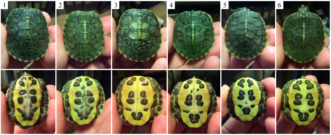 turtles composite