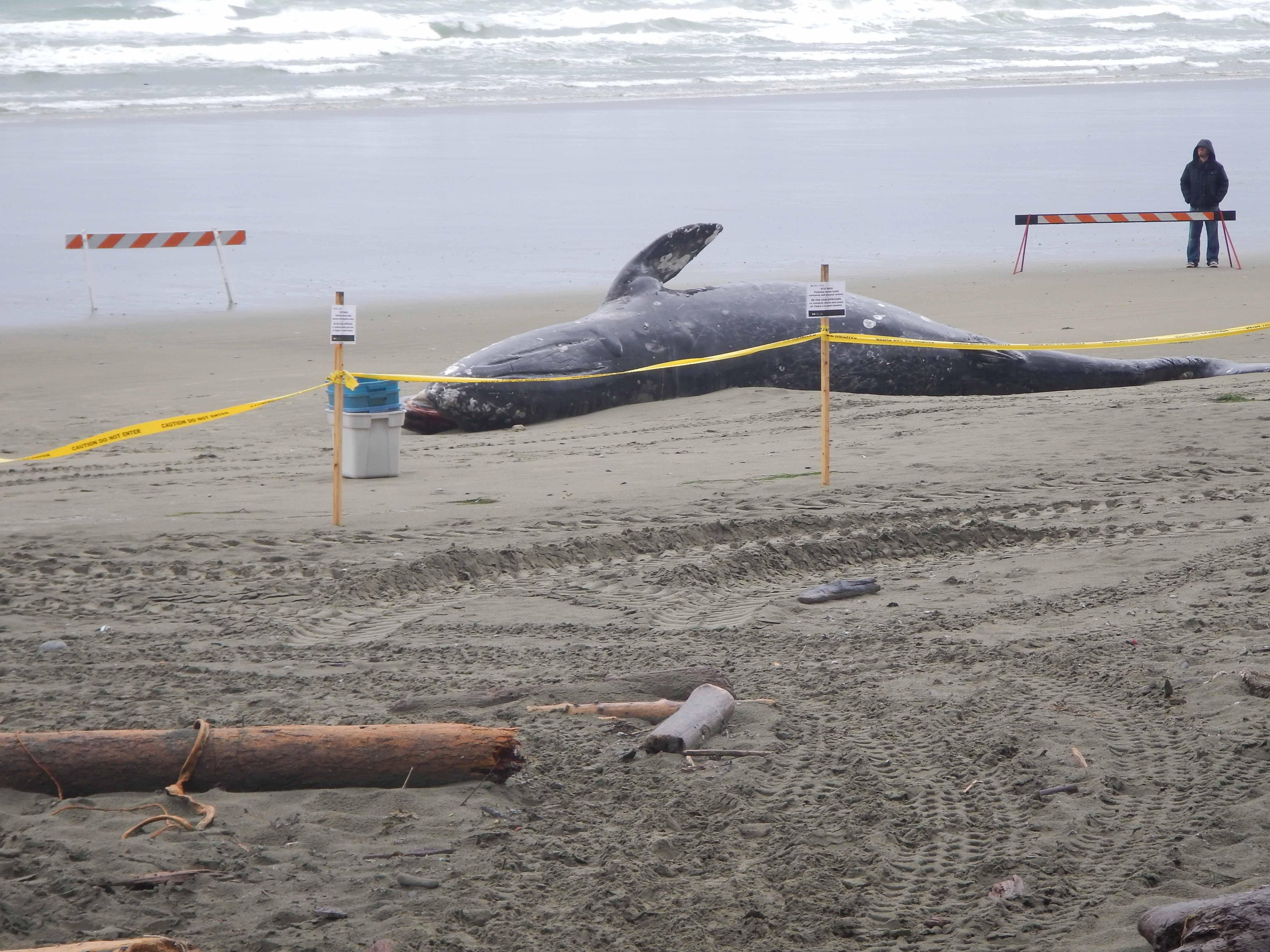 Whale 001