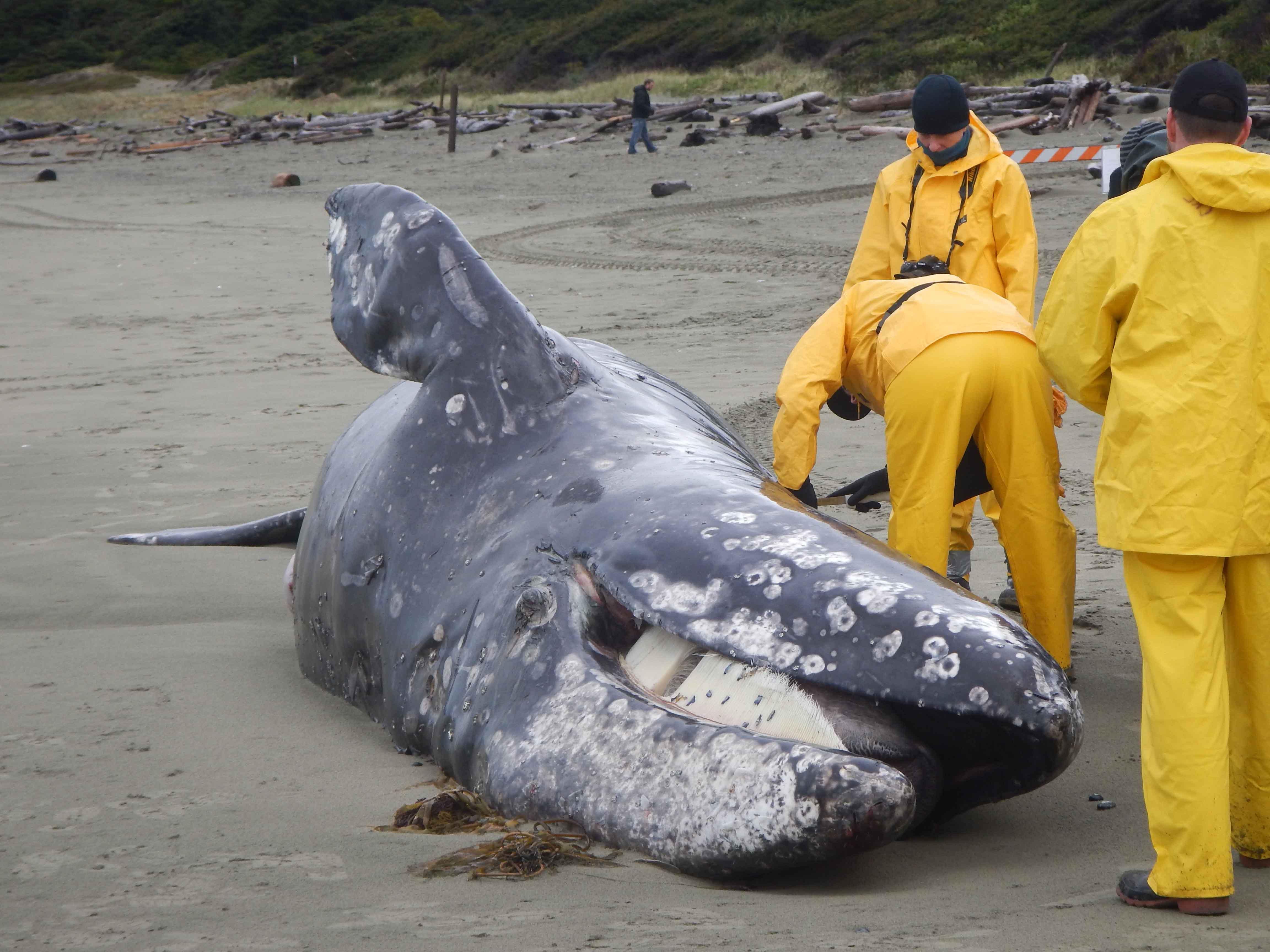 Whale 005