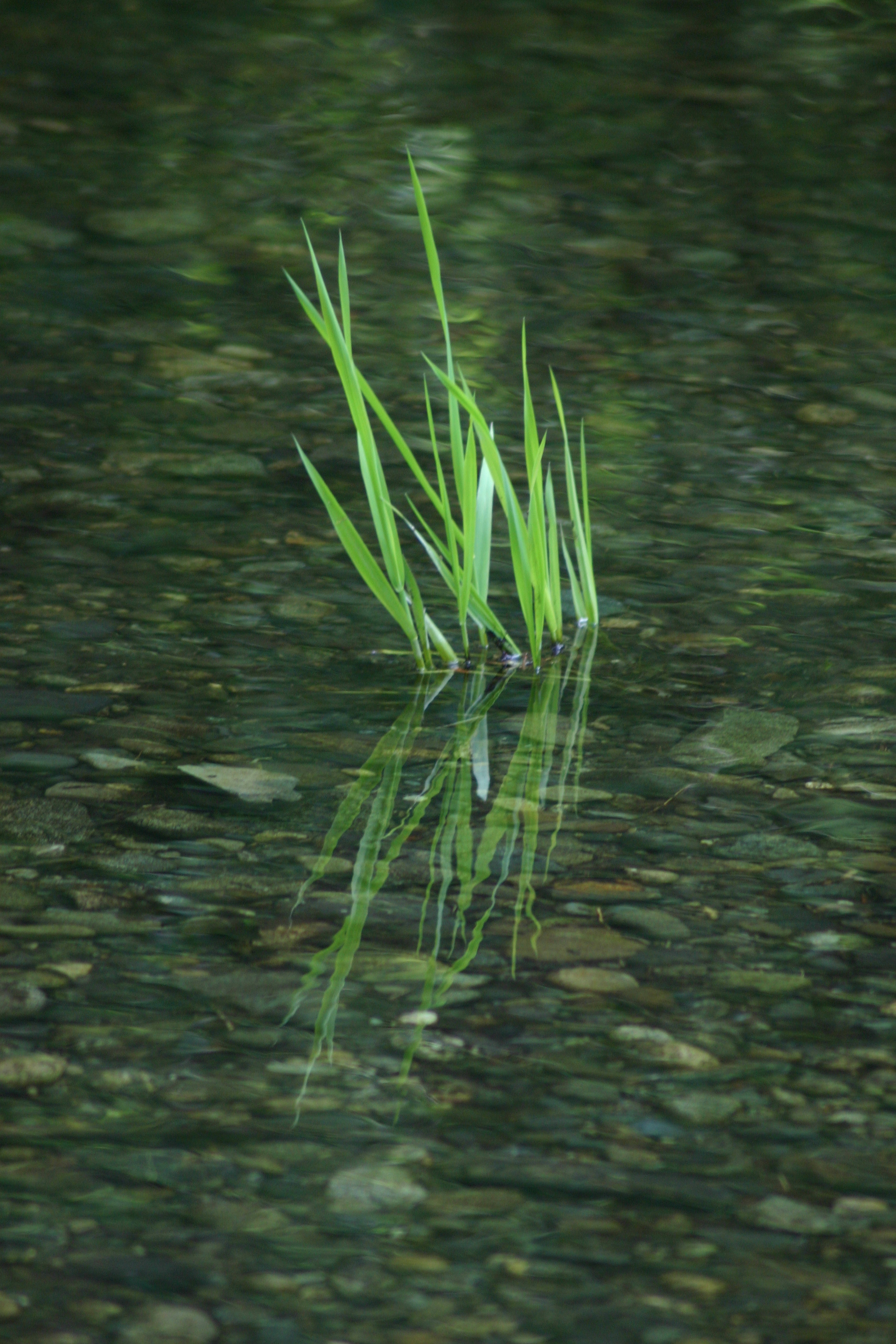 PLANT IN STREAM