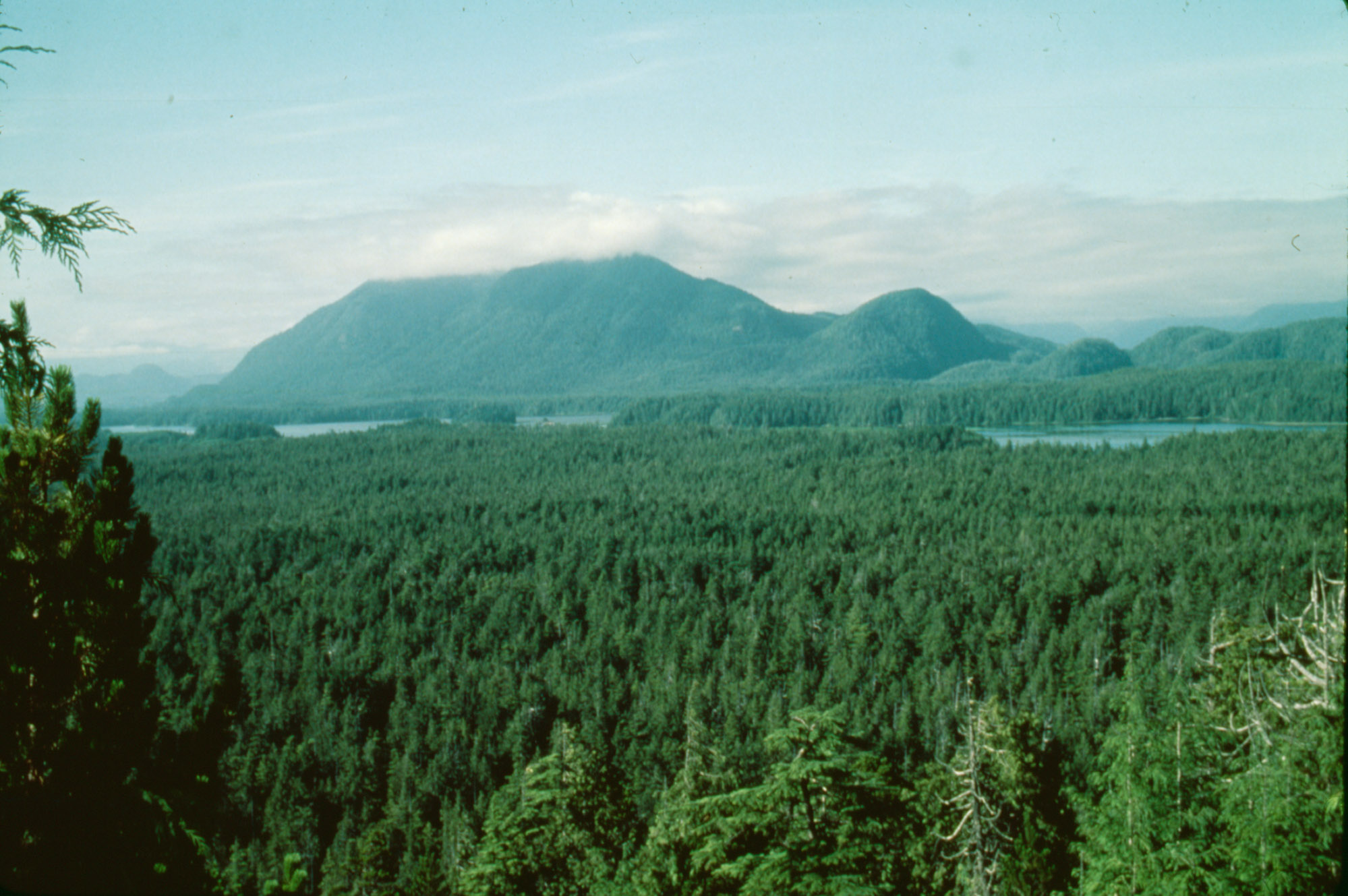This image shows a view overlooking large evergreen forest with a forest covered mountain in the background. There is a narrow body of water through the image close to the mountain