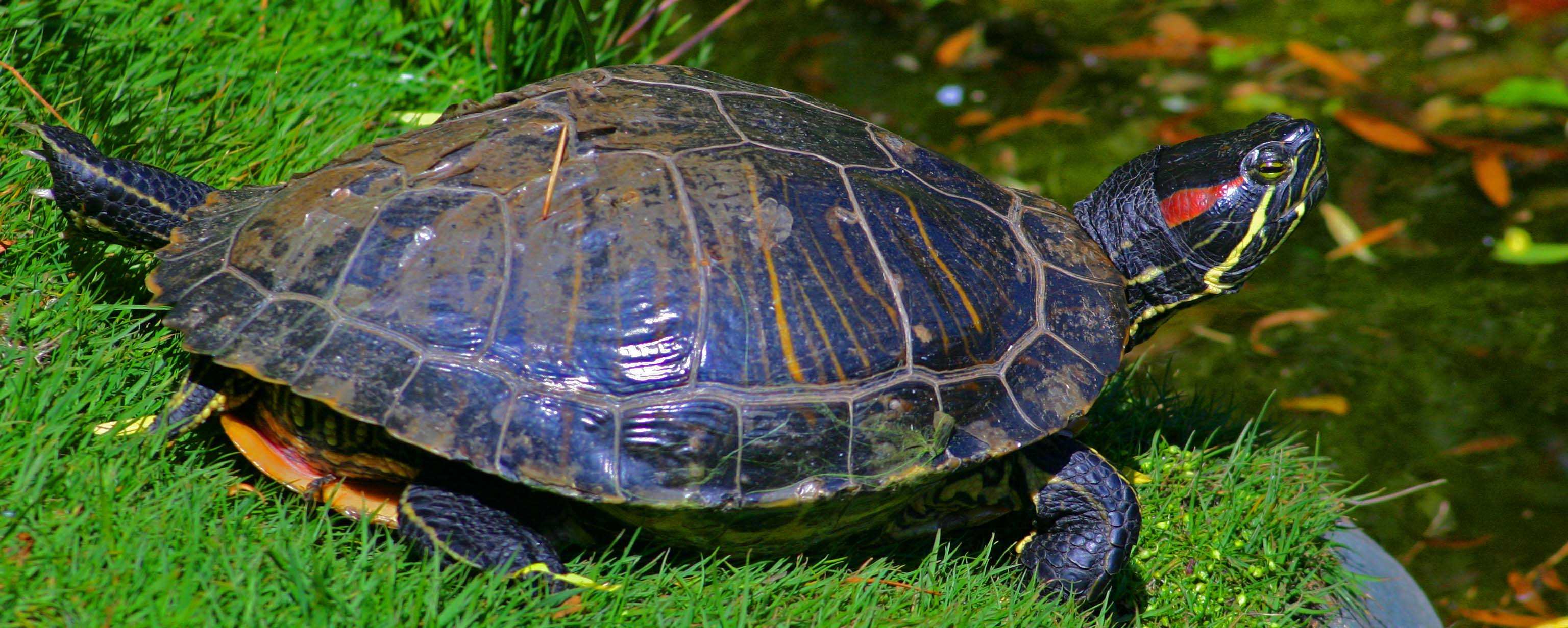Troubles with Turtles | Staff Profiles